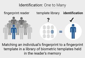 biometric-fingerprint-identification-borer-one to many